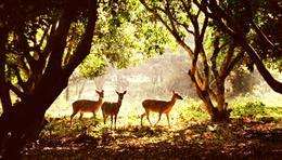 Get Vietnam visa online to visit Cuc Phuong National Park